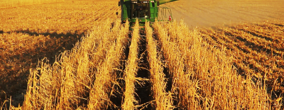 Agronomy Update: Looking Ahead to 2020